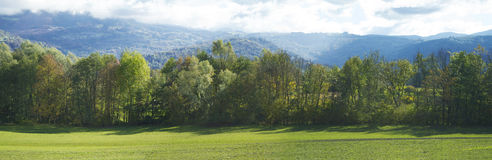 Meadow with green grass and trees with blue sky in the backgroun. D Royalty Free Stock Images