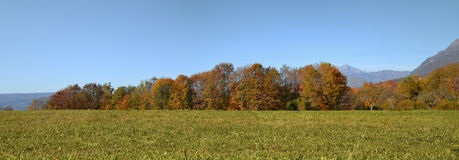 Meadow with green grass and trees. With blue sky in the background, autumn Stock Images