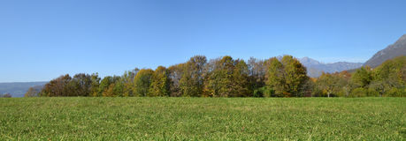Meadow with green grass and trees. With blue sky in the background, summer Royalty Free Stock Photos
