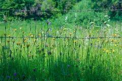 Meadow Stock Photo