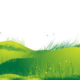 Meadow green, summer, grass Stock Photography