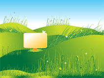 Meadow green, summer, grass Royalty Free Stock Image