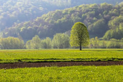 Meadow with green tree in Slovenia. Green meadow in front, forest in back Royalty Free Stock Photos