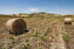 Meadow of hay bales Royalty Free Stock Image