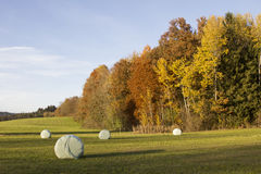 Meadow with hay bales, colorful edge of the wood Stock Images