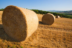 Meadow of hay bales in a late summer afternoon Royalty Free Stock Image