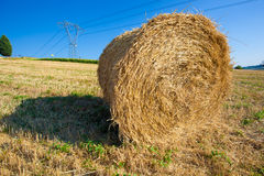 Meadow of hay bales in a late summer afternoon Royalty Free Stock Photography
