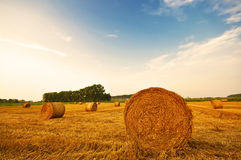 Meadow of hay bales in a late summer sunset Stock Photos