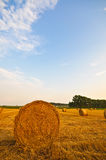 Meadow of hay bales in a late summer sunset Stock Photo