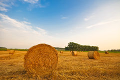 Meadow of hay bales in a late summer sunset Stock Image