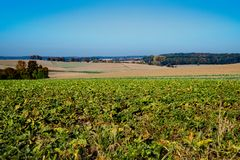 Hill landascape Bad Wimpfen, Germany. Road called Burchstrasse stock images