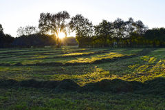 Meadow with hay at sunrise Stock Photography