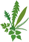 Meadow Herbs Stock Image