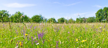 Meadow with herbs and flowers in spring Stock Photography