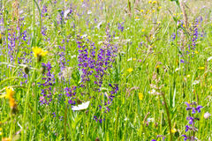 Meadow with herbs and flowers in spring Stock Photo