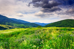 Meadow with herbs in the mountains. Huge meadow with herbs in the mountains after the rain Royalty Free Stock Image