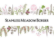 Meadow herbs seamless borders background. Illustration for posters, greeting cards, and other printing projects. Royalty Free Stock Images