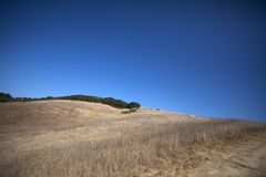 Meadow on a Hill. With dried grass, some trees, and a clear blue sky Royalty Free Stock Photo