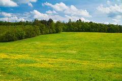 Meadow on a hill with forest and sky. Green spring meadow with trees behind and sky above stock photos