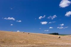 Meadow in Hokkaido Stock Images