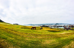 Meadow and horse Royalty Free Stock Photos