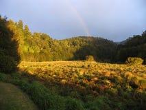 meadow idylliczna Zdjęcia Stock