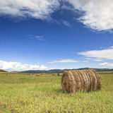Meadow of Inner Mongolia Royalty Free Stock Images