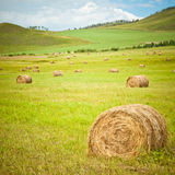 Meadow of Inner Mongolia Royalty Free Stock Image