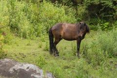 meadow końska blisko żywnościowej, Obrazy Stock