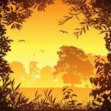 Meadow Landscape Stock Images