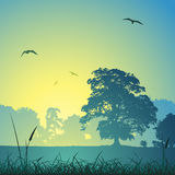 Meadow Landscape Royalty Free Stock Image