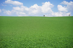 Meadow landscape background. Meadow landscape green grass blue sky background Stock Photos