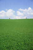 Meadow landscape background. Meadow landscape green grass blue sky background Royalty Free Stock Photography