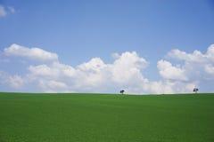 Meadow landscape background. Meadow landscape green grass blue sky background Stock Image