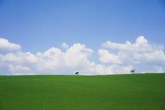 Meadow landscape background. Meadow landscape green grass blue sky background Royalty Free Stock Photo