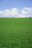 Meadow landscape background. Meadow landscape green grass blue sky background Stock Images