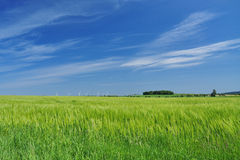 Meadow landscape, blue sky, Saxony, Germany Royalty Free Stock Image