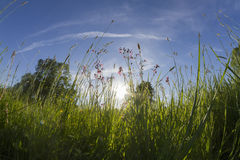 Meadow landscape Stock Photos