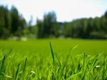 Meadow landscape. Countryside landscape at Jyvaskyla, Finland Stock Image