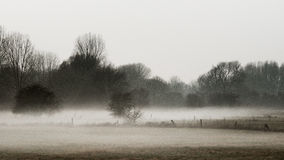Meadow landscape in the fog. Meadow landscape in Wesel Germany in the fog Stock Photography