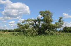 Meadow landscape of Havel river. Summertime Stock Photos