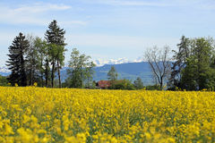 Meadow landscape. With small clouds Stock Photography