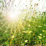 Meadow landscape in spring Stock Images