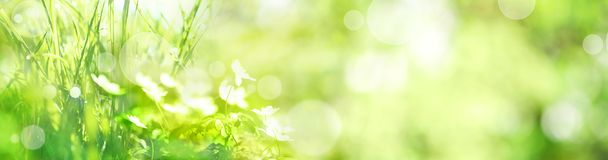 Meadow landscape in summer Stock Photography
