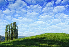 Meadow landscape with trees Stock Image
