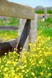 meadow lato fotografia royalty free