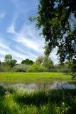 meadow lato Obraz Royalty Free