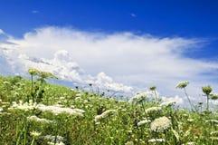 meadow lato zdjęcia royalty free