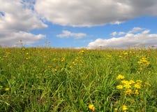 meadow lato Obraz Stock