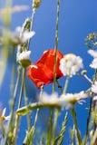 meadow lato Zdjęcia Stock